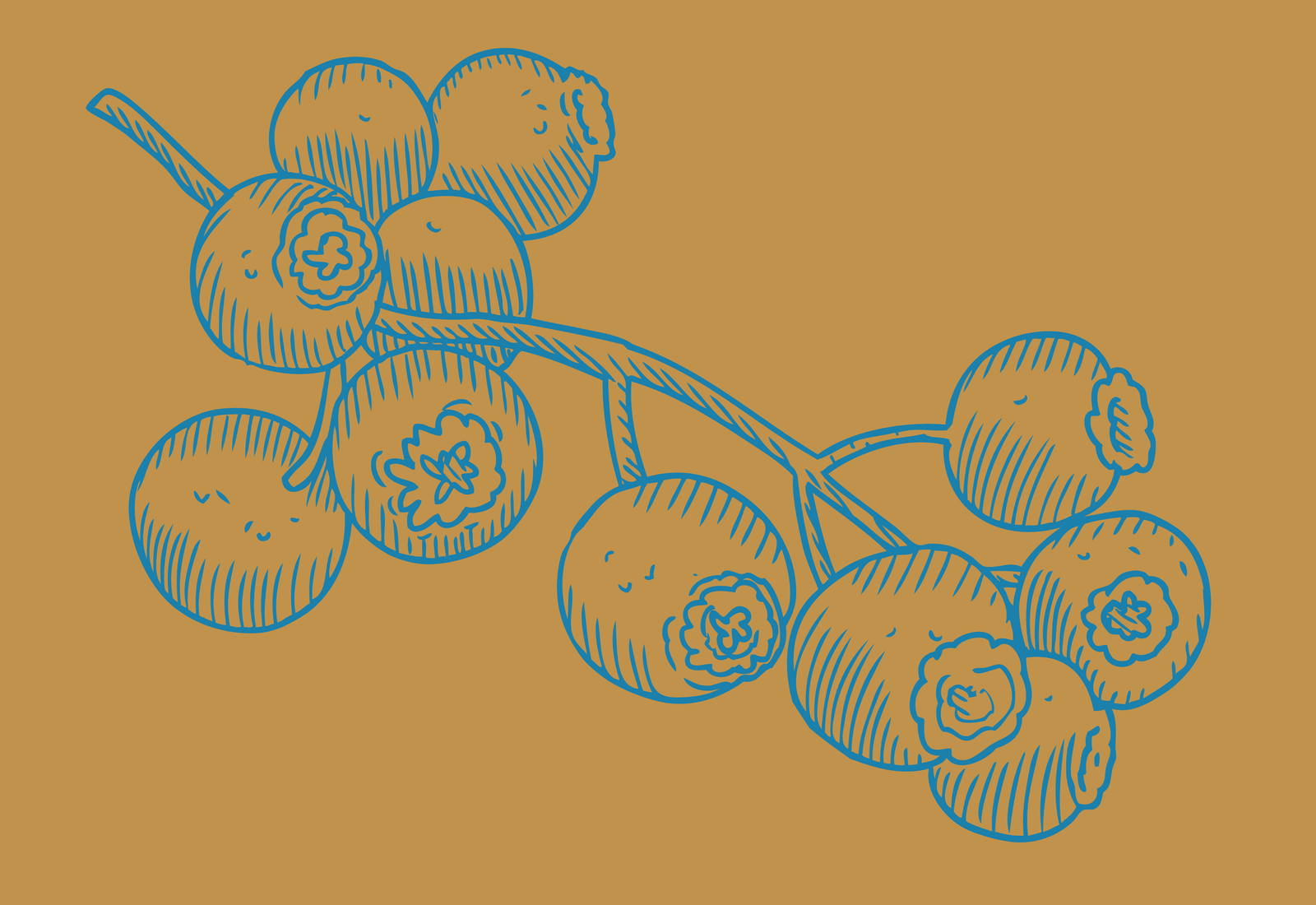 Blueberries sketch on ocre background