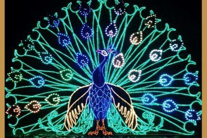 Un paon réalisé en tubes de LED au zoo de Bakersfield