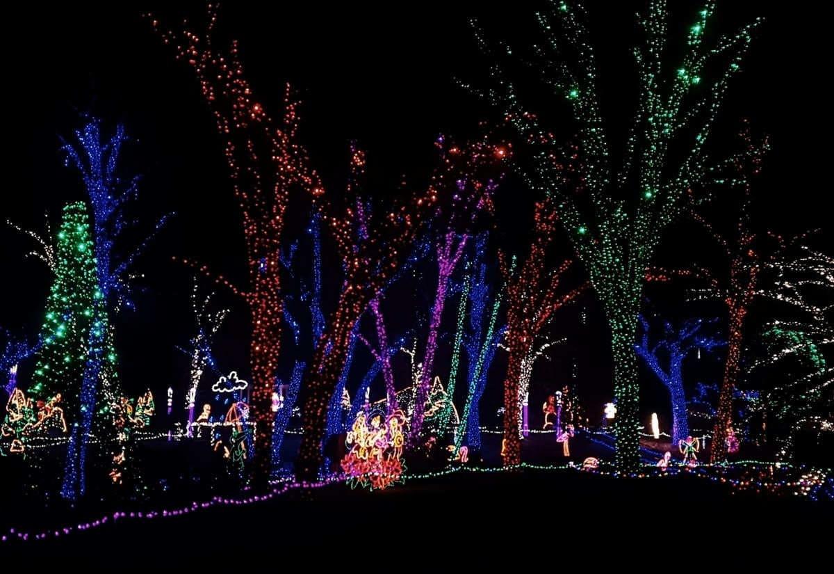 Arbres illuminés par des LED colorées au zoo de Bakersfield