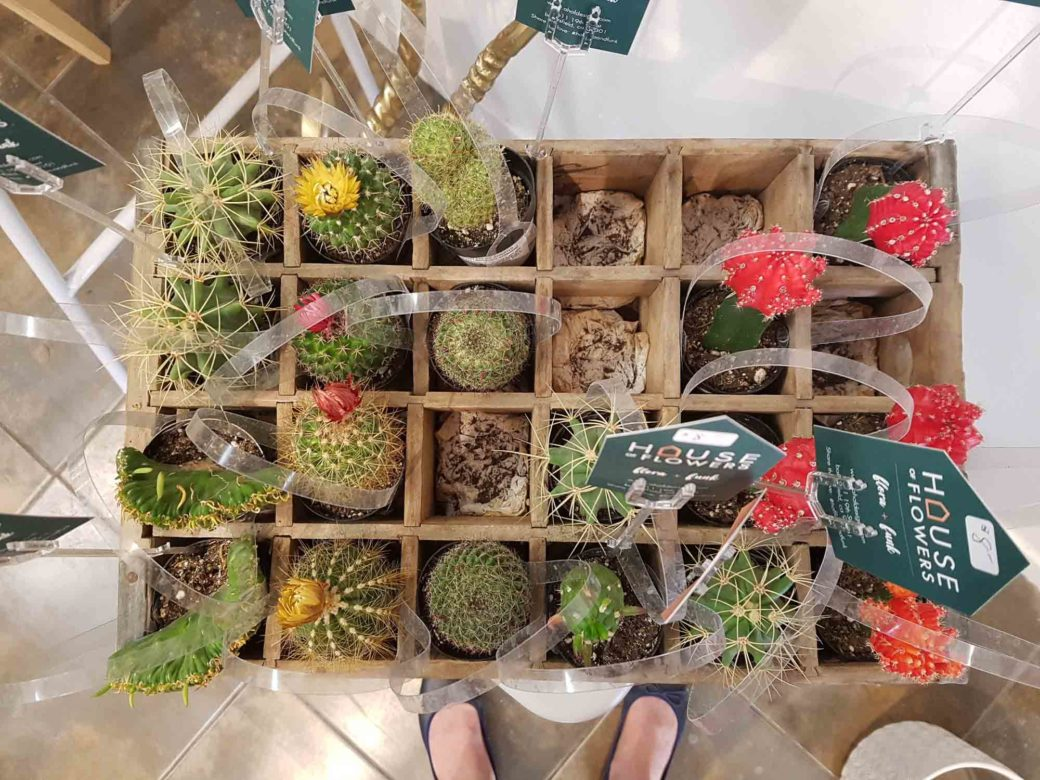 House of Flowers, Bakersfield California, cacti